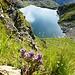 Lago Nero - im Hintergrund Alpe Antabbia im Val Bavona