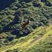 Da ist das arme Vieh, dass mit einem Helikopter runter geflogen wird..