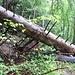 Im Urwald auf dem Weg zum Isloch