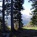 Gipfelblick aus dem Wald zum Mittaggüpfi