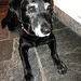 Der süsse Rettungshund leistete mir in der Hütte etwas Gesellschaft und Aufmunterung :-)