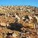 Steinslalom mi unserem Hirtenhund vor dem erreichen des Aragac Südgipfels.