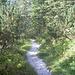 Unten geht's dann über schöne Waldwege zurück zur Höllentalangerhütte.