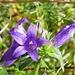 blau-violett