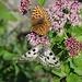 Schmetterling-Flut