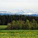 Die Berner, u.a. Wetterhorn, Schreckhorn, Finsteraarhorn.