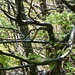 etwas unheimlich: Schlangen kriechen durch die Baumwipfel