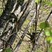 ungewöhnlich: Schlange auf dem Baum