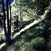 Typischer Aufstieg zum Rifugio Alp de Vazzola: irgendwo an einem Baum ein Wanderwegzeichen, der Weg selber meist schmal und teilweise zugewachsen.