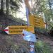 """auch diesmal wieder über die """"steile Abkürzung"""" zur Capanna Brogoldone"""