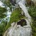 wilde Holzstrukturen