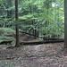 auf dem Trampelpfad Ost: mehrmals müssen Bäume überklettert oder unterquert werden...