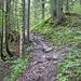 Der Anstieg zum Schönberg verläuft lange durch den Wald.