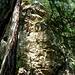 Hier hängt der 'Hammer'!<br />Nicht zu unterschätzen - die senkrechte Einstiegswand. Das ist der Grund, warum ich sage: der Lehner Klettersteig ist nicht unbedingt ein Anfängersteig. Dann schon lieber hier in die Seile steigen: am [http://www.hikr.org/tour/post69633.html  Stuibenwasserfall in Umhausen].