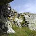 Fakultative Abseilstelle vom Nordgrat durch eine steile Grasrinne (T6)