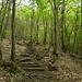 Sentiero ben curato nel bosco...