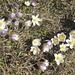 Blumen am Wegesrand. Da ich kein Botaniker bin, frage ich, wie die heissen ?