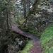 schmale Waldpassage