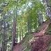 Aufstieg auf noch gutem Wege durch den Frühherbstwald. Achtung, Stacheldraht auf Brautschau!