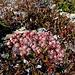 Herbstblumen 1