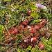 Herbstblumen 3