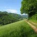 Grüner Jura bei Beinwil