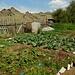 fast hinter jedem sibirischen Holzhaus, verbirgt sich ein solch bunter Gemüsegarten