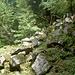 Das Heidelberger Felsenmeer