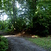 Wir folgen einem breiten Waldweg, der direkt nach Norden führt. An dieser Stelle wendet sich dieser Weg nach links. Wir nehmen den kleinen, nicht leicht zu erkennenden Pfad, der hinter dem dicken Baum über einen kleinen Hügel und danach im Wald bergab führt.