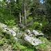 lauschige Waldplätze