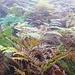 Der Weg schlängelt sich durch brusthohe Farnfelder - alles ehemaliges Weideland