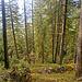 Infolge des anstrengenden Aufstiegs bleibt kaum Zeit, den schönen Wald zu geniessen