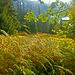 Goldiggrünes Farnfeld