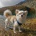 Stolzer Hund, und noch stolzeres Herrchen (nicht im Bild)