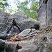 Hinter diesen Felsen, geht der Steig wieder in einen Wanderweg über und man gelangt nach einiger Zeit zum Reitsteig, der sich als breiter Wanderweg über das Plateau zieht.