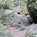 Im unteren Teil der Bärenfangstiege. Diese steile Stiege verfügt über keinerlei Steighilfen.