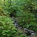 Feuchtwald.