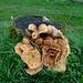 eine riesige Pilz-Familie
