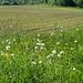 Wiesen und Äcker beherrschen die Szenerie auf dem Ottoberg
