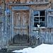 Katze bei Baschenheimat