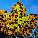 Herbstblatt mit Altersflecken