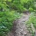 Das steile Geröllweglein durch die bewaldete Montoz-Nordflanke.