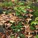 Funghi ovunque