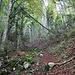 durch den Wald geht es zur Combe des Geais hoch
