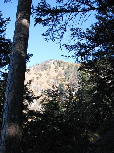Blick Richtung Schnappenlahner vom Karrenweg unterhalb des Windecks