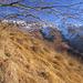 Herbstlich, sommerlich, winterlich? Januar im Tessin! (Foto [U sglider])