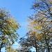 Herbstwald I