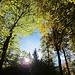 Wunderbares Licht im Herbstwald...