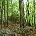 Ruinen im Waldabstieg gegen Cagenasca