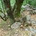 Weganfang mitten im Wald, ab jetzt gibts die roten Markierungen.